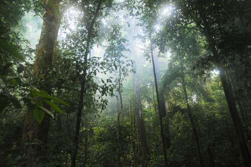RenRe offsets emissions by helping communities, wildlife and forests – The Royal Gazette